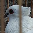 大きな目と真白き羽根