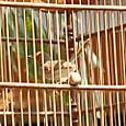 1600種のインドネシアの鳥の1種
